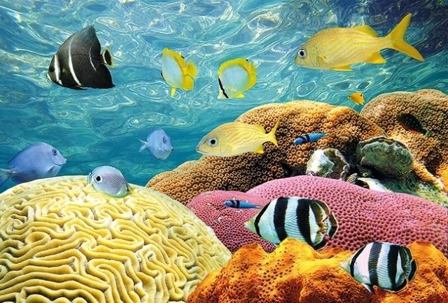 الشعاب المرجانية وأكثر الجزر جاذبية على مستوى العالم  1411106869.544154.inarticleLarge